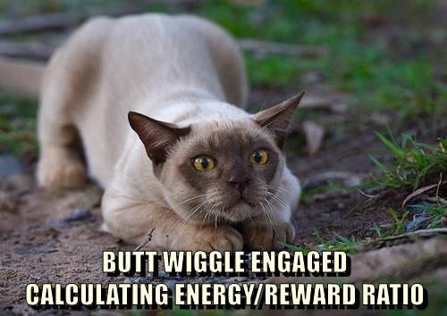 animals captions Cats funny - 8544249600