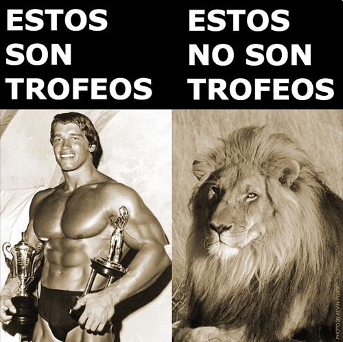 Arnold Schwarzenegger trofeos