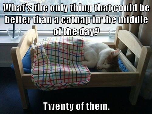 animals captions Cats funny - 8544473088