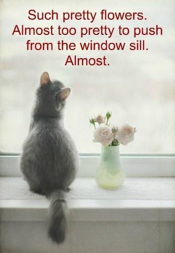 Cats funny captions - 8544527104