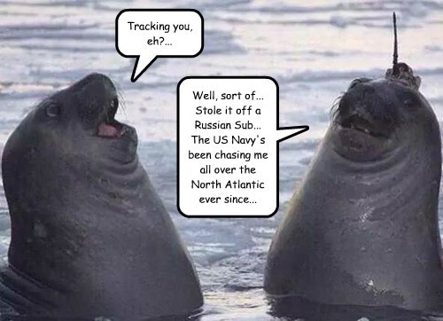 captions seals funny - 8544700928