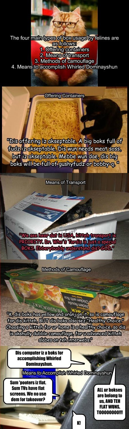 Cats and Boxes by Forepaugh Brainstormer