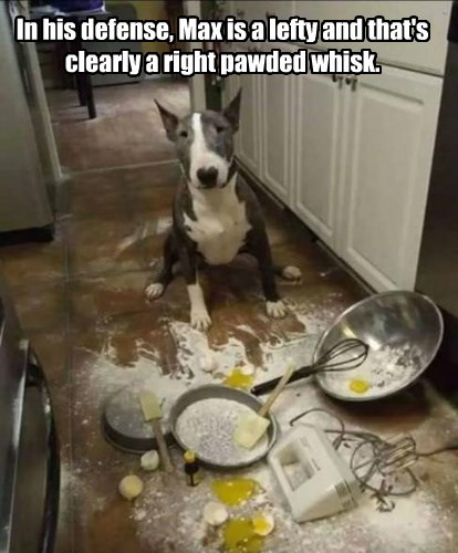 dogs captions funny - 8544938752