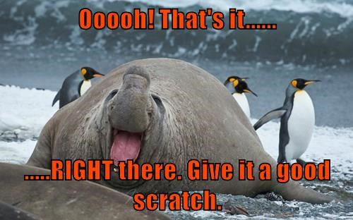 animals scratching penguins walrus funny captions - 8544944384