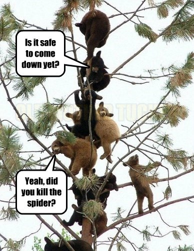 spiders,bears,captions,funny