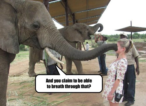 elephant captions funny - 8545045248