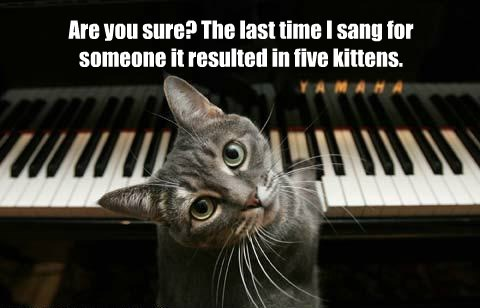 cat kitten sing result caption - 8545075712