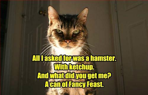 cat fancy feast hamster caption ketchup - 8545172992