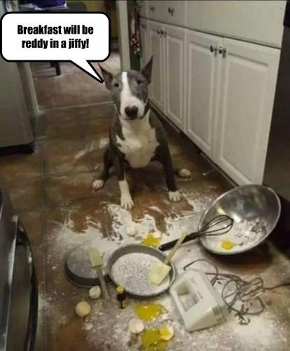 dogs baking caption funny - 8545185536