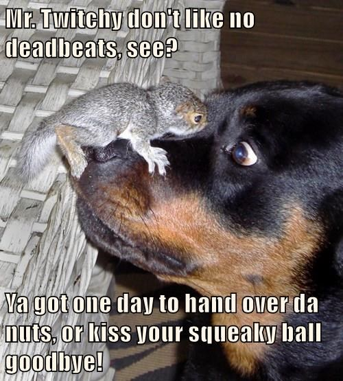 dogs,squirrel,captions,funny