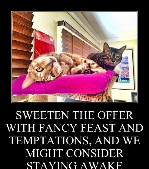 SWEETEN THE OFFER WITH FANCY FEAST AND TEMPTATIONS, AND WE MIGHT CONSIDER STAYING AWAKE