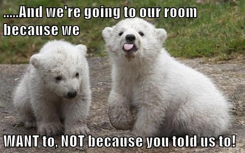 animals bears captions cute - 8545708800