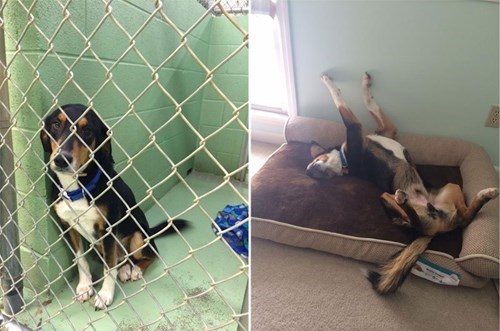 cute dogs rescue He Can Finally Relax