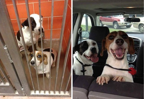 cute dogs rescue Someone Will Always Be Up For a Road Trip!