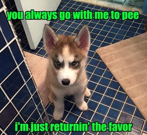 dogs favor pee caption return - 8545921280