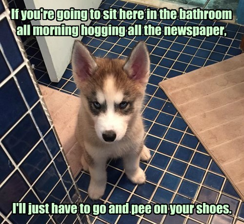 dogs,bathroom,funny,captions