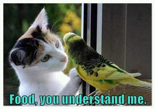 animals captions Cats funny - 8545990912