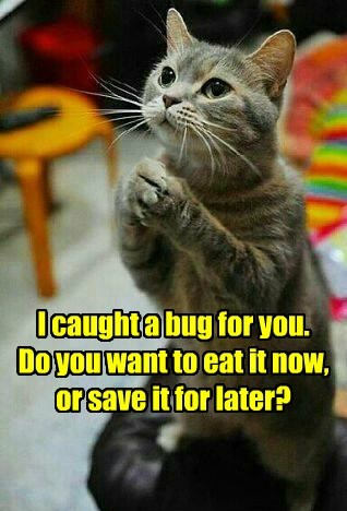 bugs caption Cats funny - 8545997568