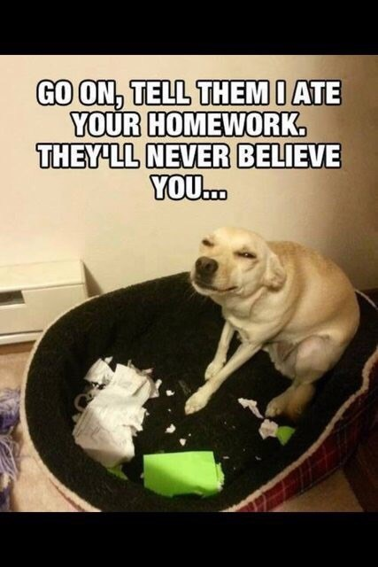 school-fails-dog-ate-my-homework