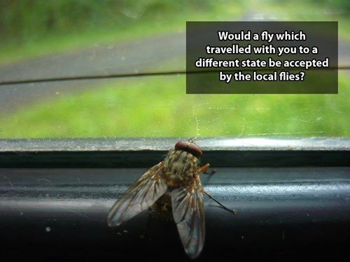 Insect - Would a fly which travelled with you to a different state be accepted by the local flies?