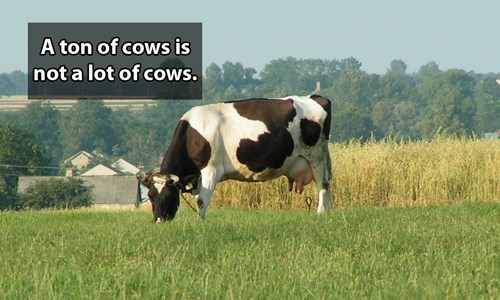 Dairy cow - A ton of cows is not a lot of cows.