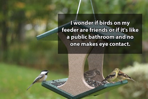 Bird food - I wonder if birds on my feeder are friends or if it's like a public bathroom and no one makes eye contact.