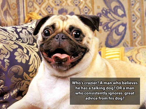 Pug - Who's crazier? A man who believes he has a talking dog? OR a man who consistently ignores great advice from his dog?