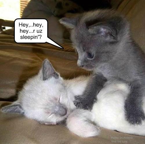 Hey,..hey, hey...r uz sleepin'?