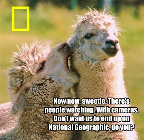 Now now, sweetie. There's people watching. With cameras. Don't want us to end up on National Geographic, do you? I I I I I I I I I I