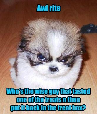 treats puppy box wise guy - 8546255360