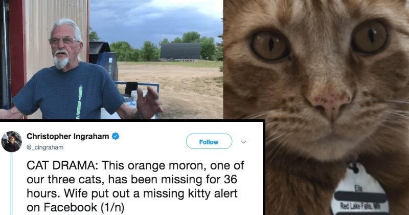 Hilarious Twitter idiotic cat