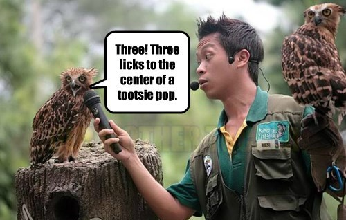 captions owls funny - 8546555904
