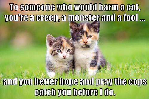To someone who would harm a cat, you're a creep, a monster and a fool ...  and you better hope and pray the cops catch you before I do.
