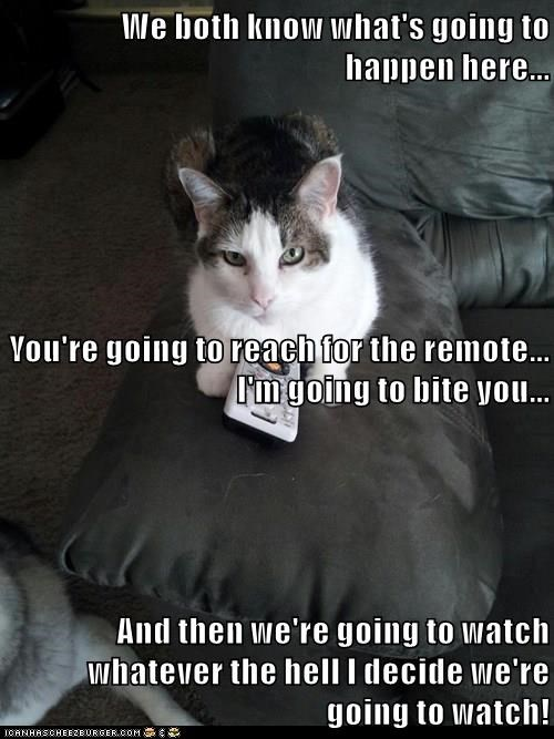 cat,remote,watch,Reach,bite,caption