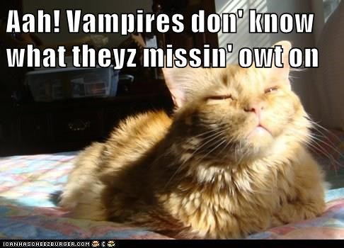 animals missing cat vampires caption sunlight - 8547168768