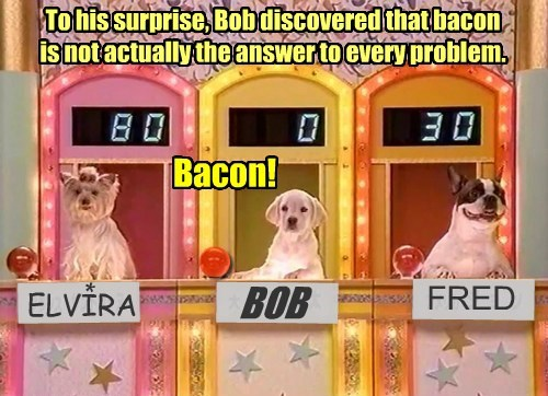 answers,dogs,caption,gameshow,funny,bacon