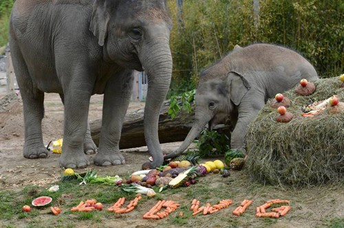 cute elephants image Baby's First Birthday Came With a Lot of Treats