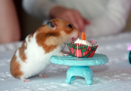 cute hamster image Tiny Birthdays Are Just as Special
