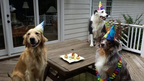 cute dogs image Birthdays Are Always Better With Friends
