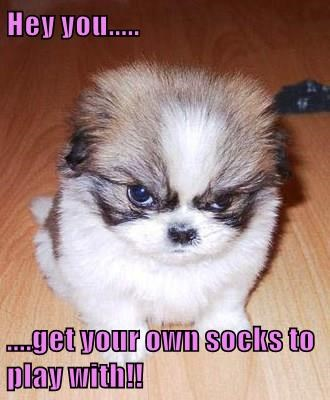 animals dogs puppy socks angry caption funny - 8547628544