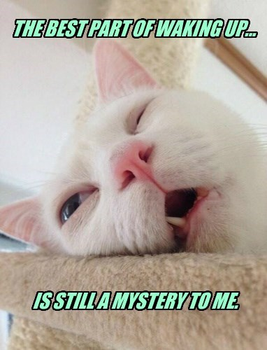 part cat best mystery caption waking up - 8547704064
