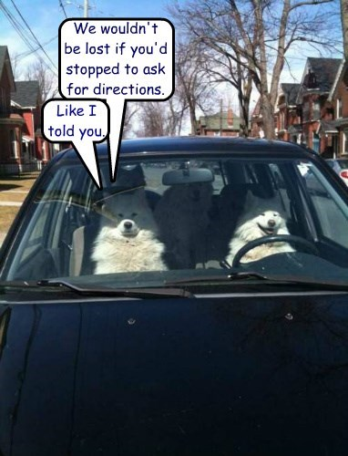 dogs nagging driving caption funny - 8547707392