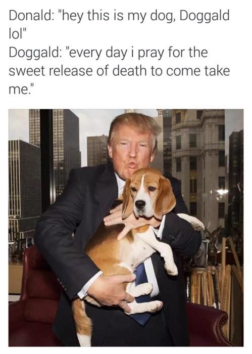 trolling-doggald-trump