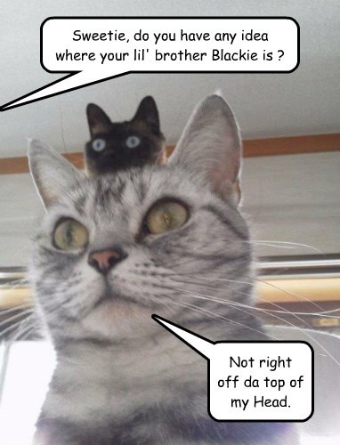 brother caption Cats funny - 8548096000