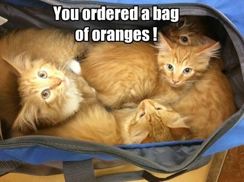captions cute Cats - 8548211712