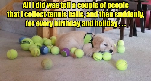 dogs collection ball caption funny - 8548317952