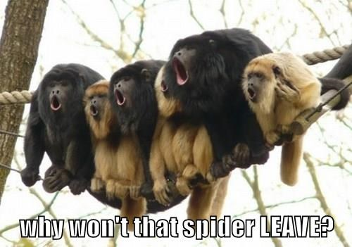 why won't that spider LEAVE?