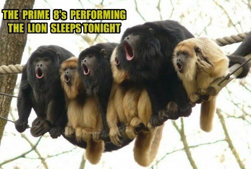 THE  PRIME  8's  PERFORMING  THE  LION  SLEEPS TONIGHT