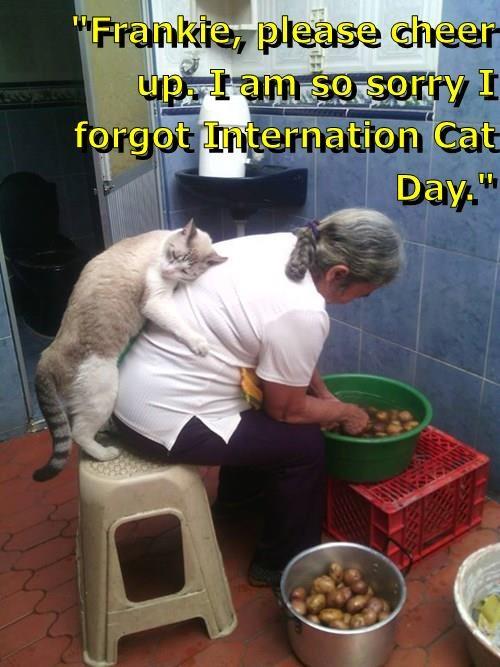 """Frankie, please cheer up. I am so sorry I forgot Internation Cat Day."""