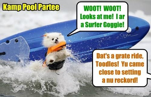 Kamp 2015: After Stewie had Mr. AllThumbs install a powerful wave making masheen in teh deep end ob teh Pool, lots ob brave Kamper kitties an' goggies tried der luck riding teh big waves!